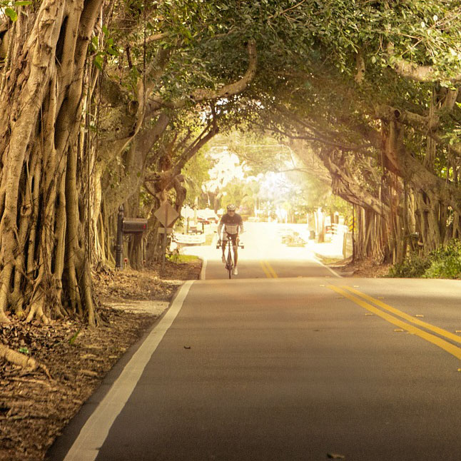Road tours at the Weinstraße - Mountainbike trips and Road tours in Europe | Bikefex